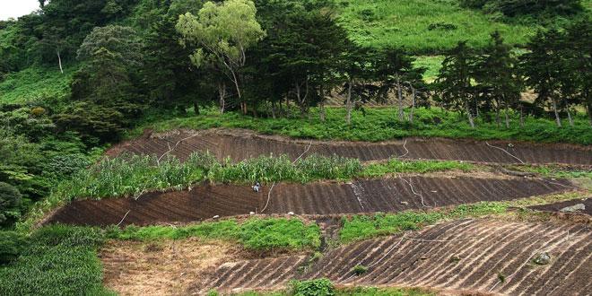 Βραζιλία: 860.000 στρέμματα τροπικού δάσους θα αποψιλωθούν για γεωργική χρήση, εξόρυξη και υλοτομία