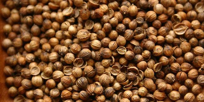 Οι θεραπευτικές – και όχι μόνο – ιδιότητες των σπόρων του κόλιαντρου
