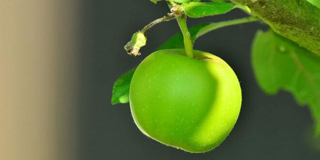 Μείωση των φυτοφαρμάκων μέσω της Δράσης 10.1.08 (Κομφούζιο) – Το ύψος ενίσχυσης ανά καλλιέργεια