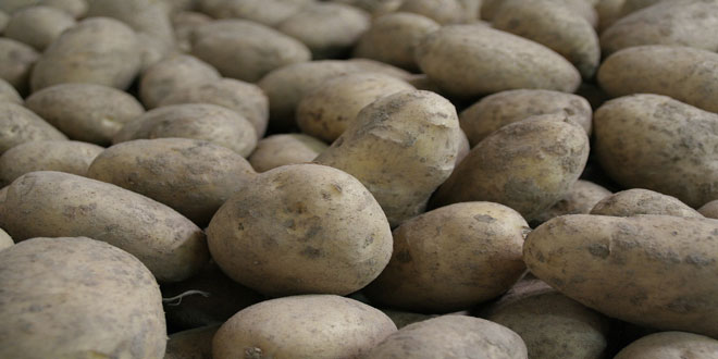 Εξάρθρωση κυκλώματος «ελληνοποίησης» πατάτας από τη Γαλλία