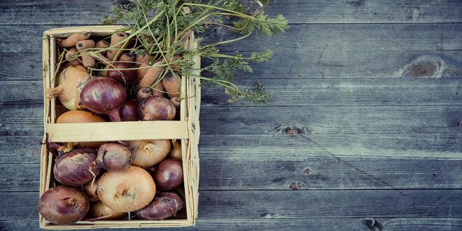 Καλές προοπτικές για τις εξαγωγές βιολογικών προϊόντων στη Γερμανία