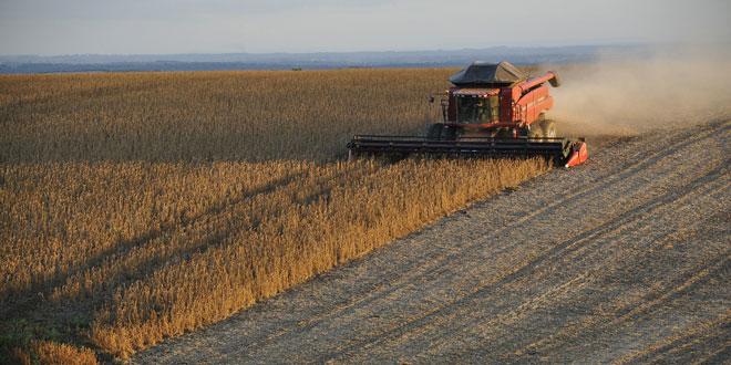 Σπόροι σποράς: Μεγάλη μείωση στο ποσό της συνδεδεμένης ενίσχυσης