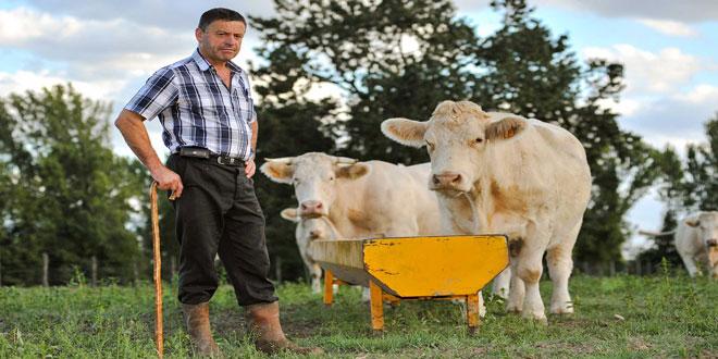 Βιολογική κτηνοτροφία – Δράση 11.2.2.: Έναρξη υποβολής των αιτήσεων – Τα ποσά ενίσχυσης και η διαδικασία υποβολής