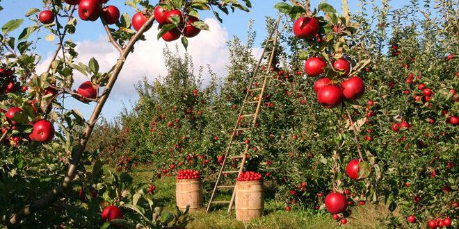 Δράση 10.1.08: Μηλιά, αχλαδιά και κυδωνία στις επιλέξιμες καλλιέργειες