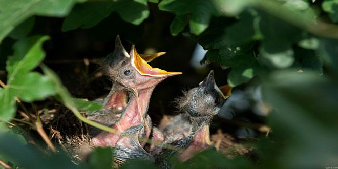Δραματική μείωση του πληθυσμού των πουλιών λόγω φυτοφαρμάκων
