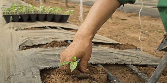 Δράση 4.1.1.: Χρηματοδότηση έως 80% για νέους και επαγγελματίες γεωργούς
