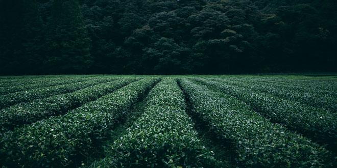 Αρωματικά και φαρμακευτικά φυτά: Η προετοιμασία του εδάφους πριν την εγκατάσταση