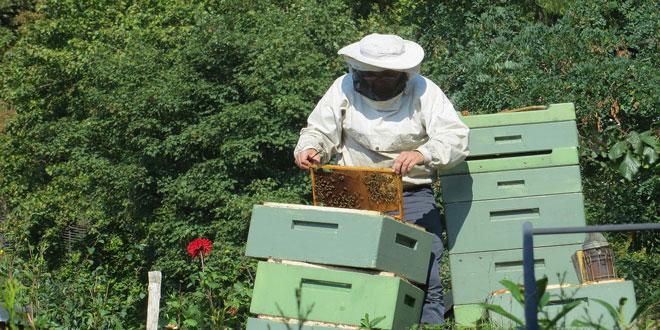 Χρηματοδότηση ύψους 2,7 εκατ. € στα Κέντρα Μελισσοκομίας