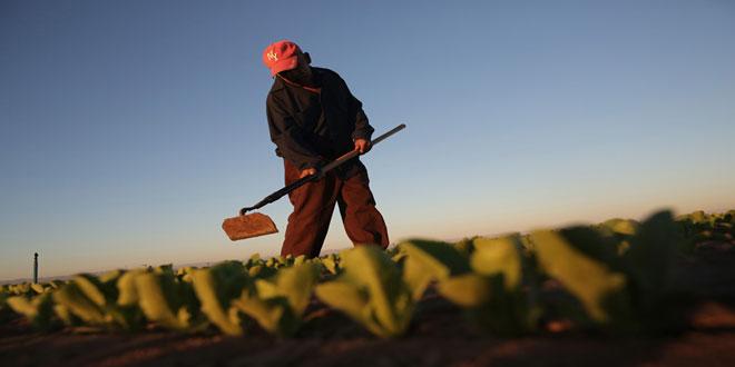 Σε ποιες περιπτώσεις είναι υποχρεωτικό το βιβλίο απασχολούμενων σε αγροτικές εργασίες