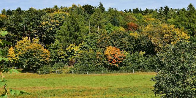 Νέα ανάρτηση δασικών χαρτών και προγραμματισμός για τις υπόλοιπες περιοχές