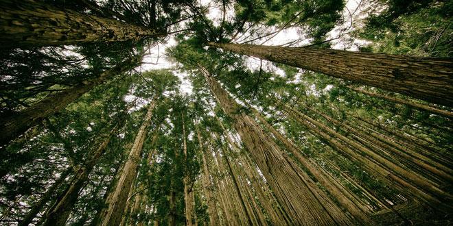 Νορβηγία: Στόχος η μηδενική αποψίλωση δασών