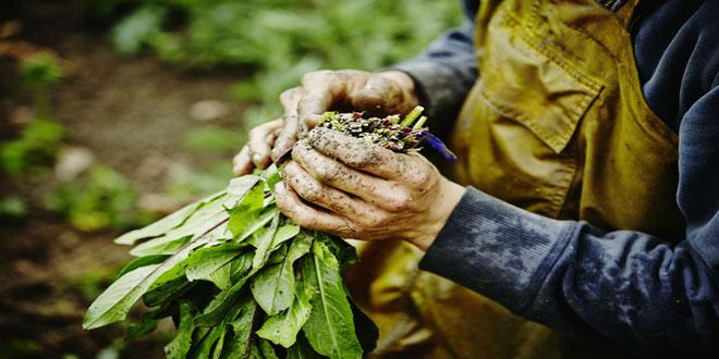 Καναδάς: Όλο και περισσότεροι καταναλωτές επιλέγουν βιολογικά προϊόντα