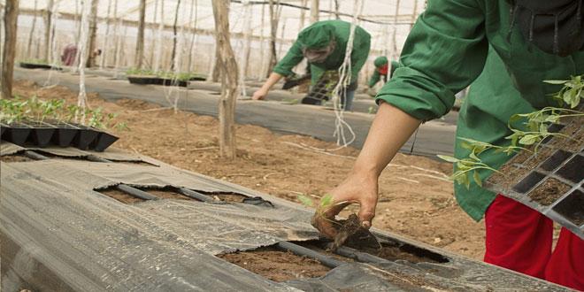 Νέοι Γεωργοί: Υποχρεωτική η βεβαίωση επαγγελματία αγρότη εντός 2 ετών