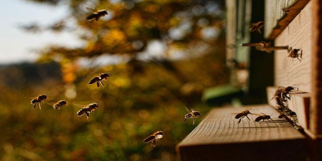 2 online σεμινάρια για τη Μελισσοκομία