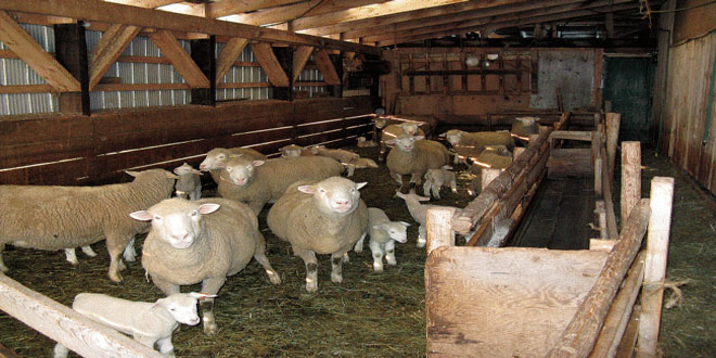 Κτηνοτροφικές εγκαταστάσεις: Αιτήσεις για Προσωρινή Άδεια Διατήρησης έως τις 4 Δεκεμβρίου