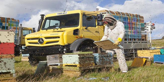 Μελισσοκομικό Πρόγραμμα 2018: Μειωμένα τα ποσά ενίσχυσης για αντικατάσταση και μετακίνηση κυψελών