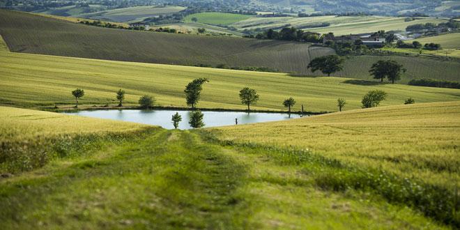 Για ποια αγροτεμάχια υποβάλλεται Ενιαία Αίτηση Ενίσχυση