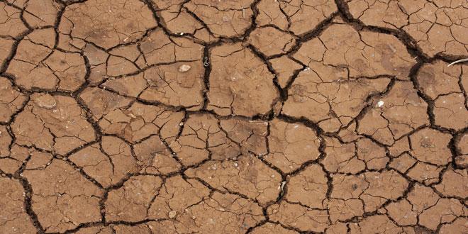 Τσεχία: Σημαντικές αυξήσεις στις τιμές των γεωργικών προϊόντων λόγω ξηρασίας