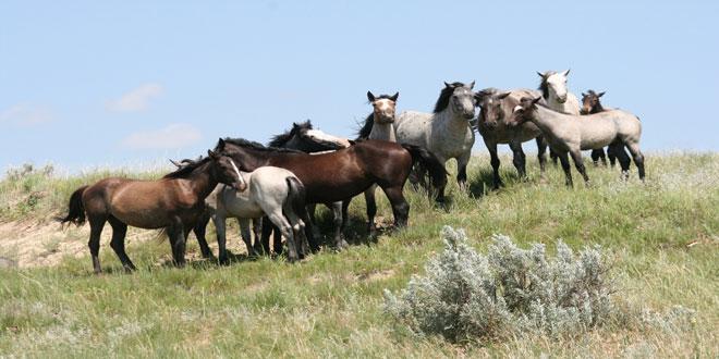 Αυτόχθονες φυλές αγροτικών ζώων: Η διαδικασία τροποποίησης ή μεταβίβασης πράξης
