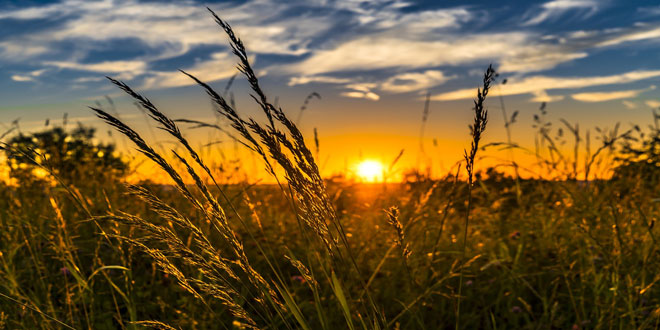 Πρόσθετα μέτρα της Ε.Ε. για την αντιμετώπιση των επιπτώσεων της ξηρασίας