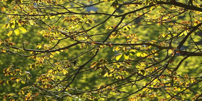 Καρυδιά – Ζευζερα: Έγκαιρη αντιμετώπιση του ξυλοφάγου εντόμου