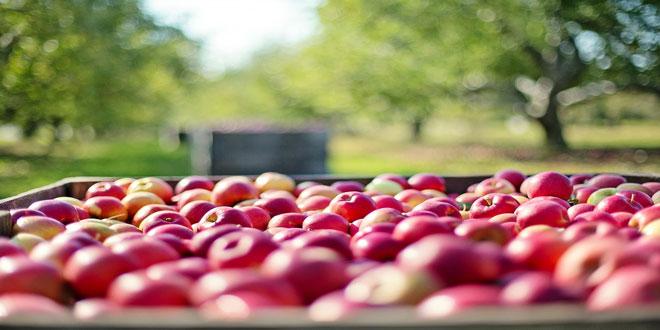 Έλεγχοι για τη σωστή χρήση φυτοπροστατευτικών προϊόντων