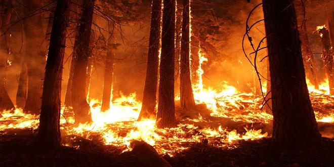 Αύξηση των μεγάλων δασικών πυρκαγιών στην Ευρώπη αλλά λιγότερη καμένη γη