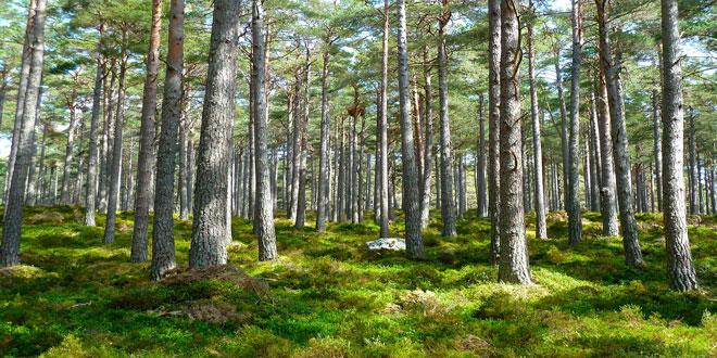 8 νέα Προγράμματα από το Πράσινο Ταμείο προϋπολογισμού 140 εκατ. €