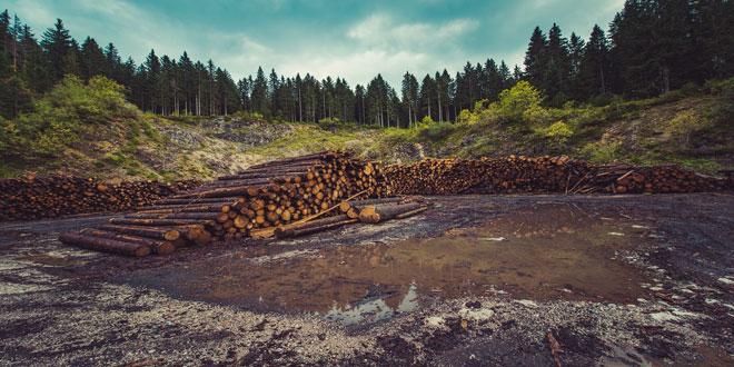 Στα ύψη η παγκόσμια παραγωγή και εμπορία προϊόντων ξύλου