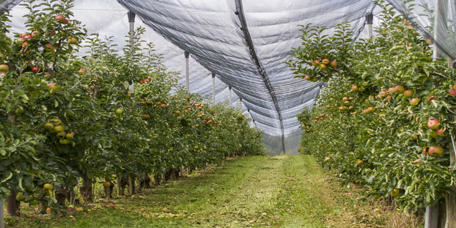 Μελέτη για την ένταξη νέων καλλιεργειών στο Υπομέτρο 5.1