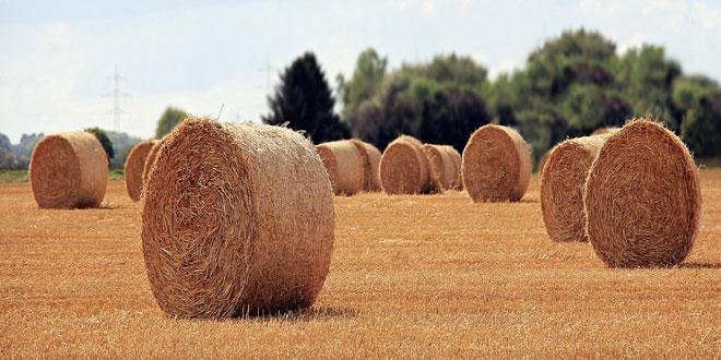 Η αξία της γεωργικής παραγωγής στην Ε.Ε. – Το παράδοξο με Ελλάδα και Μάλτα