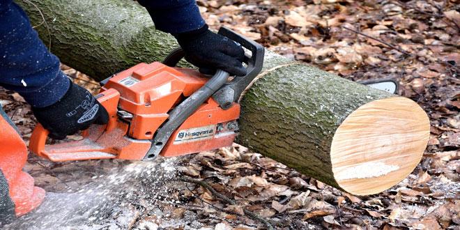 Ημερίδα για την πιστοποίηση της αειφορικής διαχείρισης των ελληνικών δασών και των προϊόντων ξύλου στο ΑΠΘ