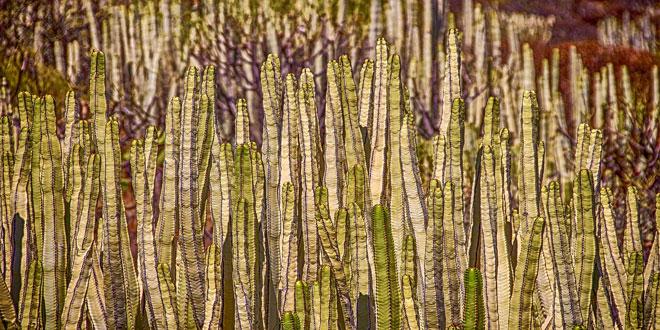 Δημόσια διαβούλευση για τον έλεγχο εισαγωγής επικίνδυνων φυτών στην Ε.Ε.