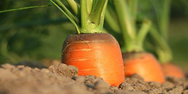 Μέτρο 11 «Βιολογικές καλλιέργειες»: Κατά 28 εκατ. € μειώθηκε ο αρχικός προϋπολογισμός