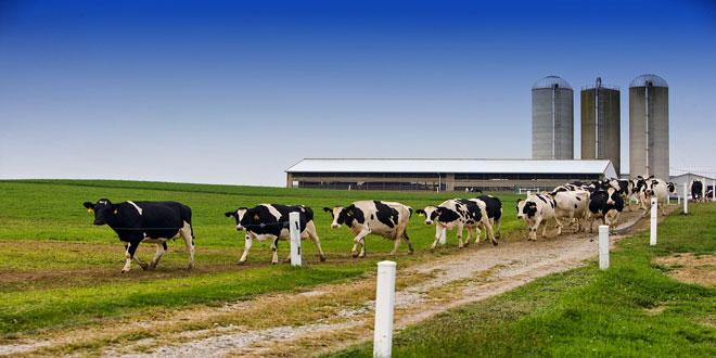 Ο ισχυρός γαλακτοκομικός τομέας της Ολλανδίας