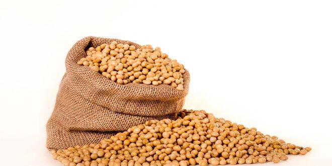 Σόγια από Αμερική κατακλύζει την Ε.Ε. – Έντονη αμφισβήτηση για τα βιολογικά ζωικά προϊόντα