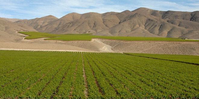Η Κίνα και όχι η ΗΠΑ, η κυριότερη αγορά για τα κρασιά της Χιλής