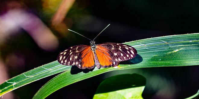 Δημόσια διαβούλευση για το Σχέδιο Δράσης διατήρησης της βιοποικιλότητας