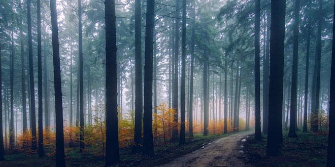 Σιωπηλό Δάσος – Το μήνυμα του Αρκτούρου