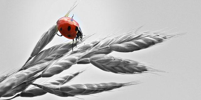 Ολοκληρωμένη φυτοπροστασία: Πρακτικές της «κοινής λογικής» οδηγούν στη μείωση του κόστους παραγωγής