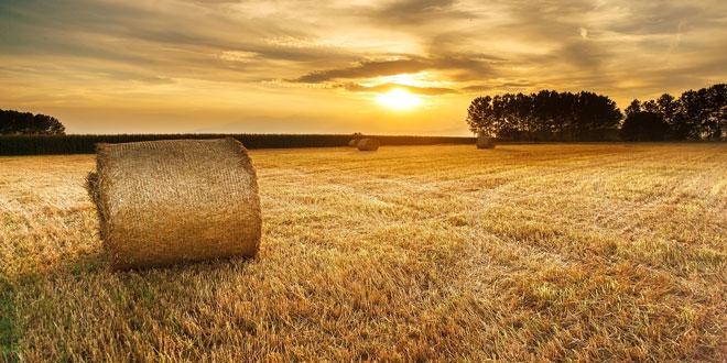 Ανάπτυξη μικρών γεωργικών εκμεταλλεύσεων – Υπομέτρο 6.3: Η Περιφέρεια με τη μεγαλύτερη χρηματοδότηση