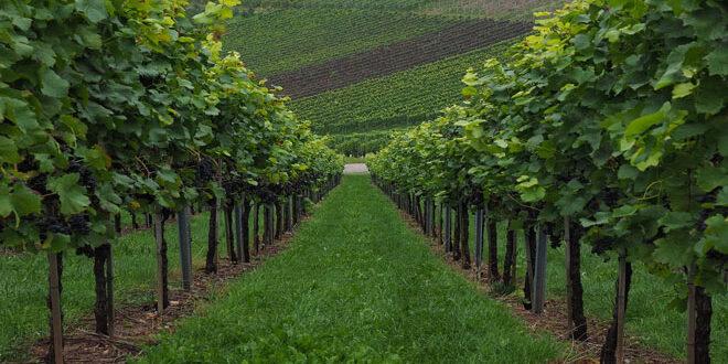 Ποιες χώρες ξεχωρίζουν στον τομέα οίνου παγκοσμίως