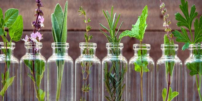 Εκδήλωση: Φαρμακευτικά Φυτά και Εφαρμογές τους στη Σύγχρονη Ιατρική