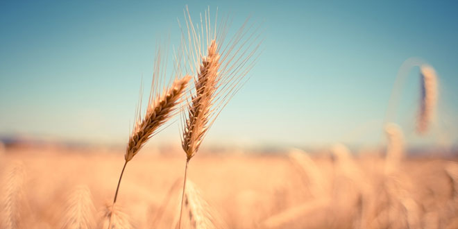 Αύξηση της πάγκοσμιας ζήτησης τροφίμων την επόμενη δεκαετία – Σταθερές οι τιμές