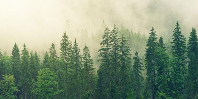 Πάνω από το ήμισυ των ενδημικών δένδρων της Ευρώπης απειλείται με εξαφάνιση
