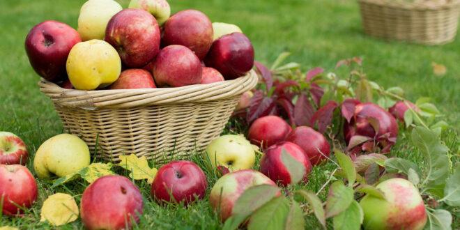 Ελληνικά μήλα στην Ινδία