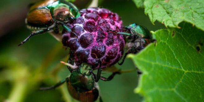 Οι 20 πιο επιβλαβείς οργανισμοί καραντίνας για τα φυτά της Ευρώπης