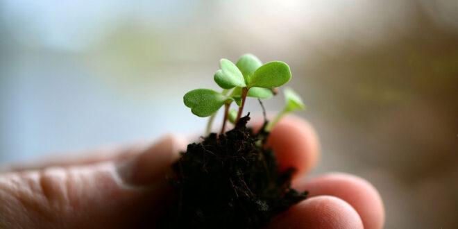 Πρόγραμμα ύψους 1,5 εκατ. € για τη δημιουργία νέων φυτικών ποικιλιών από τον ΕΛΓΟ ΔΗΜΗΤΡΑ