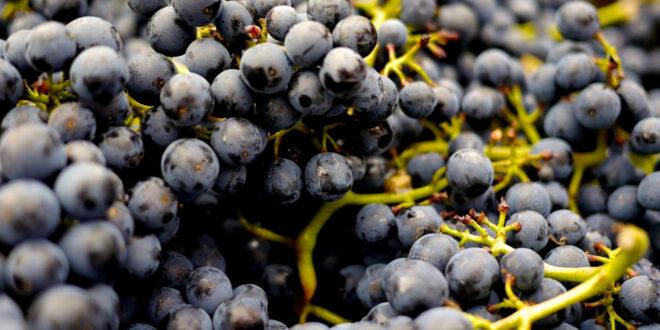 Υποχρεωτική η δήλωση παραγωγής οίνου – Ποιοι απαλλάσσονται και τα πρόστιμα