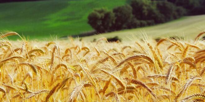 Μονόδρομος η αλλαγή στον τρόπο παραγωγής και κατανάλωσης τροφίμων